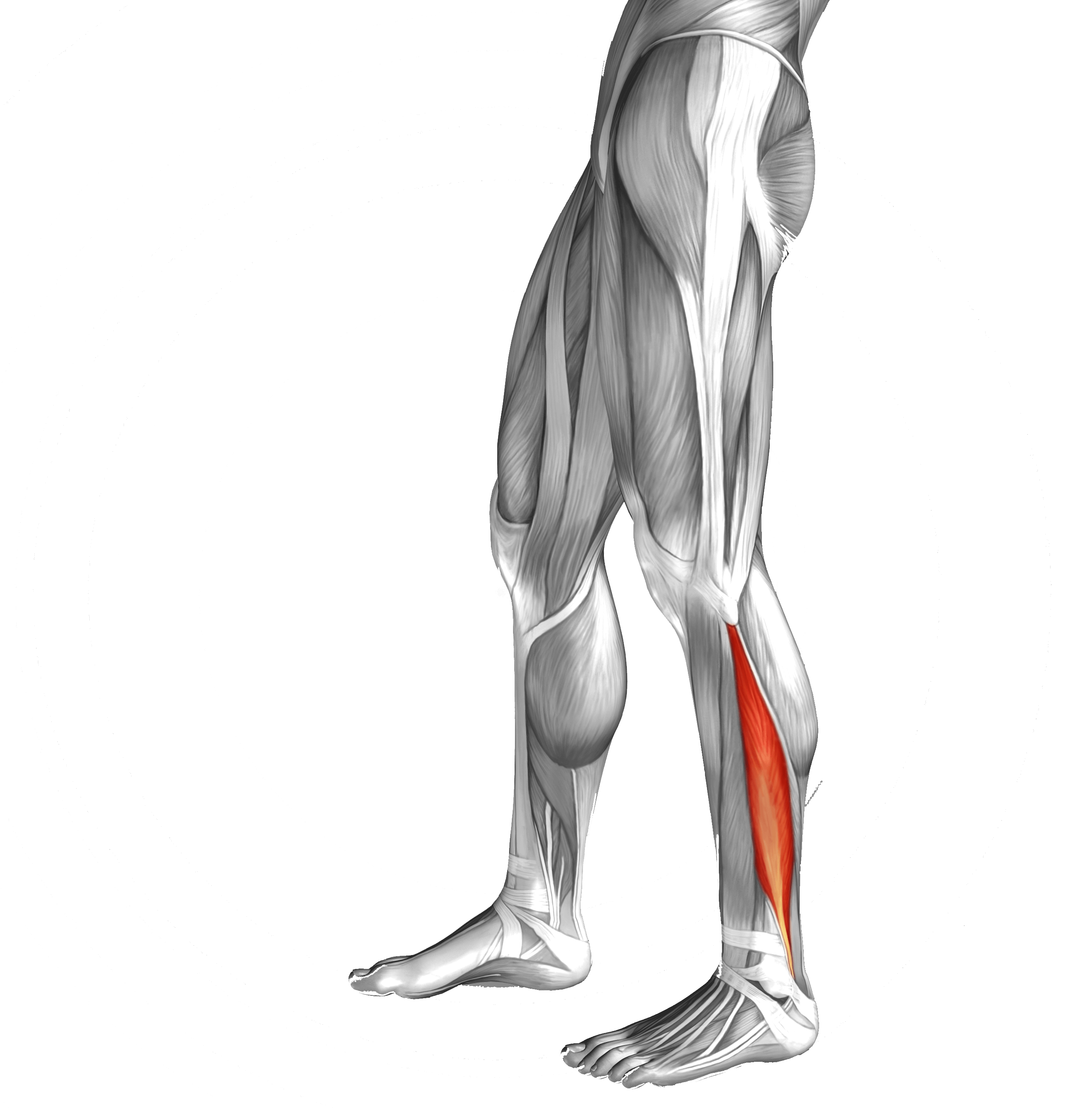 Lower Limb Exercises Leicester Podiatry Centre